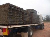 truck loaded with brushwood fence panels